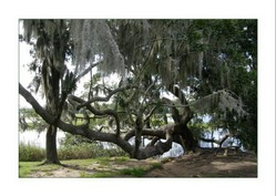 Süden/ south USA, Boone Hall Plantation 2