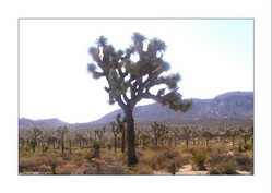 Joshua Tree National Park 1